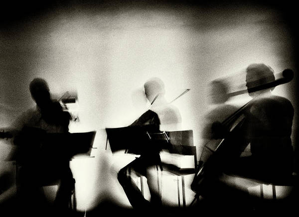 Show Photograph - Waves Of Music by Mirela Momanu