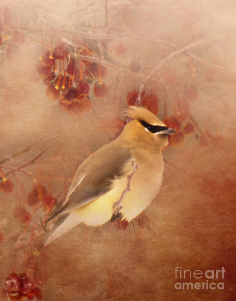 Photograph - Waxwing Buffet by Pam  Holdsworth