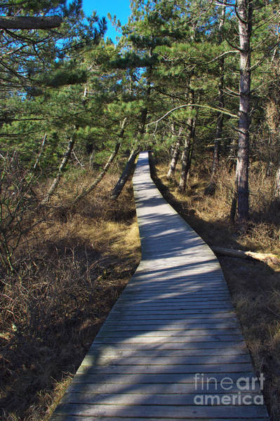 Photograph - Way To The Lake by Angela Doelling AD DESIGN Photo and PhotoArt
