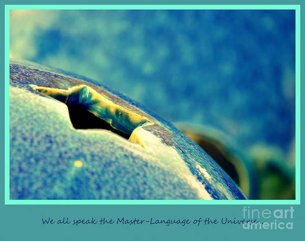 Photograph - We All Speak The Master Language Of The Universe by Susanne Van Hulst