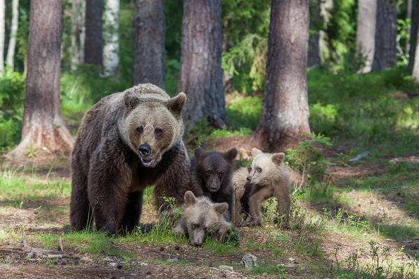 Finland Photograph - We Are Family by Alessandro Catta