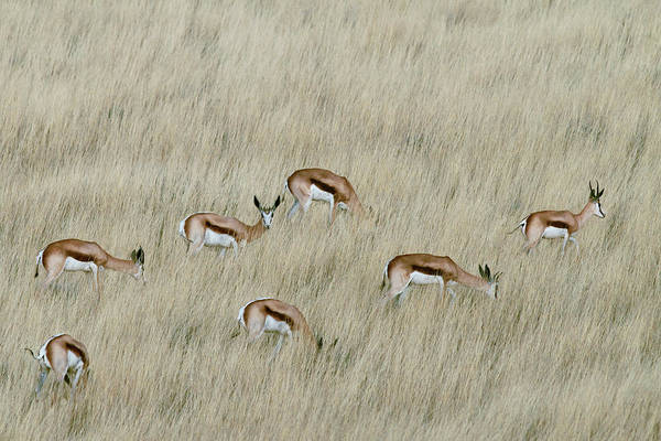 Wild Grass Photograph - We Are Spotted by Mathilde Guillemot