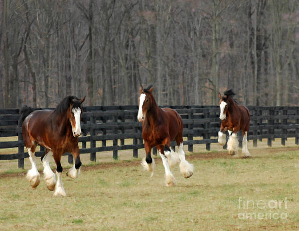 Horse Farm Photograph - We Feel Like Dancing by Sami Martin