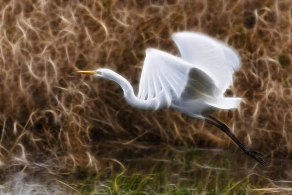 Photograph - We Have Lift Off by Wes and Dotty Weber