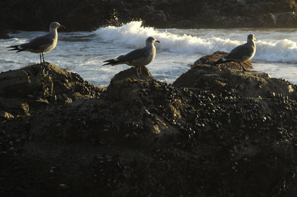 Photograph - We Three by Randal Bruck