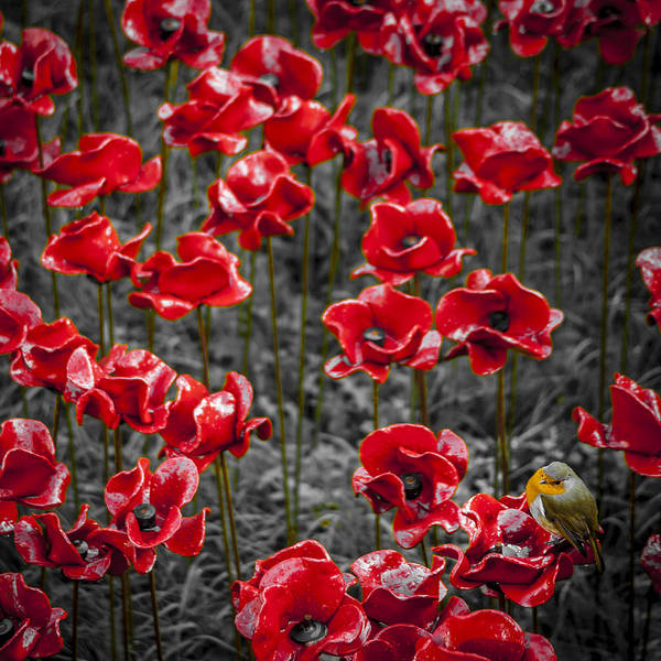 We Will Remember Them Art Print by S J Bryant