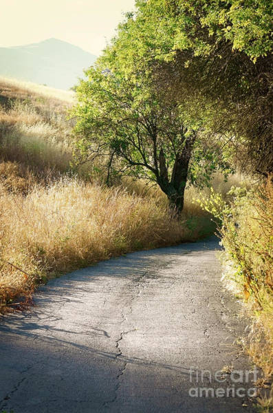 Photograph - We Will Walk This Path Together by Ellen Cotton