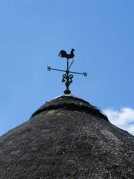 Cock Photograph - Weather Vane On A Thatched Roof by Cordelia Molloy/science Photo Library