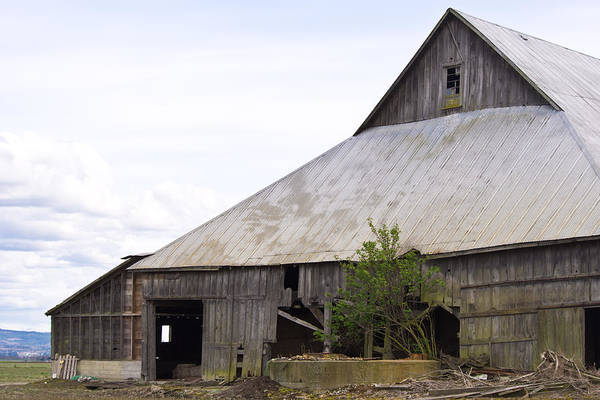 Photograph - Weathered Barn by Priya Ghose