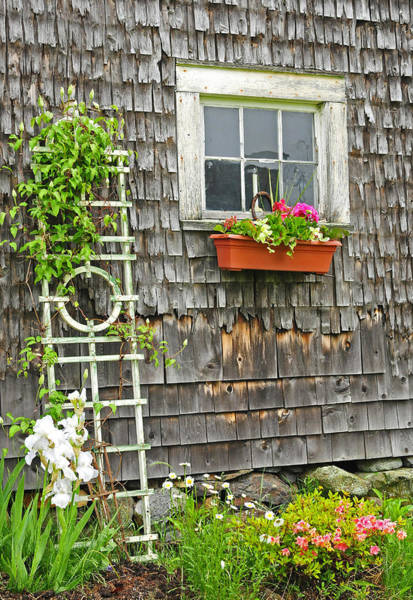 Photograph - Weathered Maine Seacoast Barn by T-S Fine Art Landscape Photography