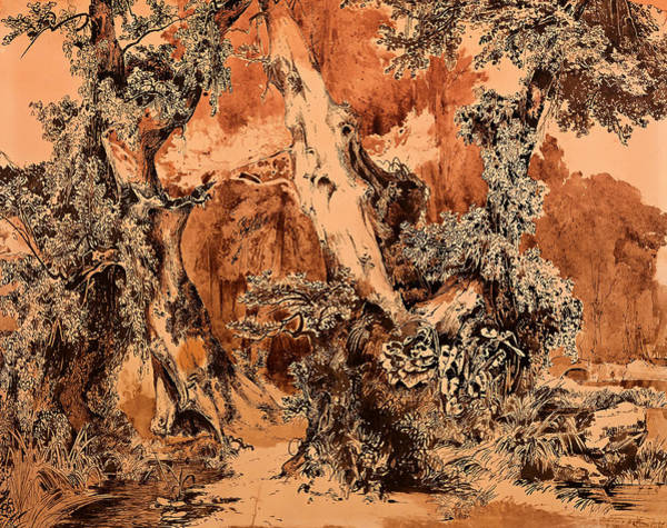 Beautiful Park Drawing - Weathered Tree Trunks In A Park by Mountain Dreams