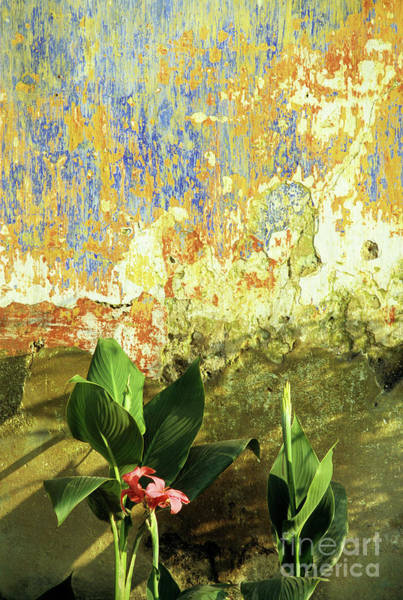 Hoi An Photograph - Weathered Wall 01 by Rick Piper Photography