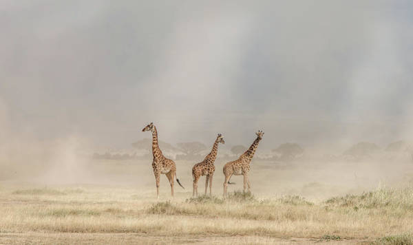 Amboseli Wall Art - Photograph - Weathering The Amboseli Dust Devils by Jeffrey C. Sink