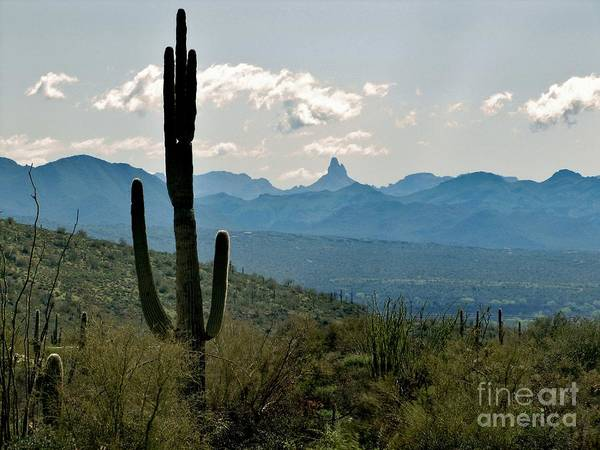 Superstition Mountains Photograph - Weaver's Needle by Marilyn Smith