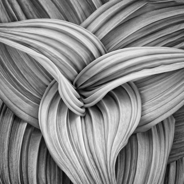 Web And Flow Art Print