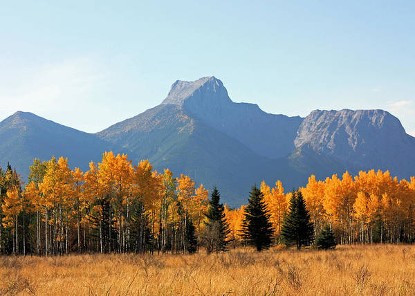 Photograph - Wedge Mountain And Aspen by Gerry Bates