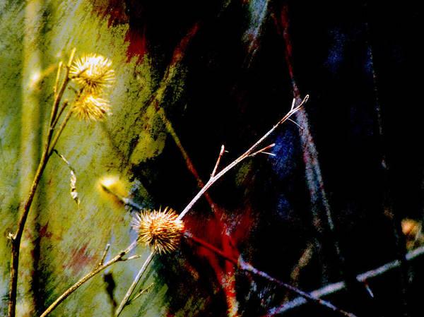 Digital Art - Weed Abstract Blend 3 by Anita Burgermeister