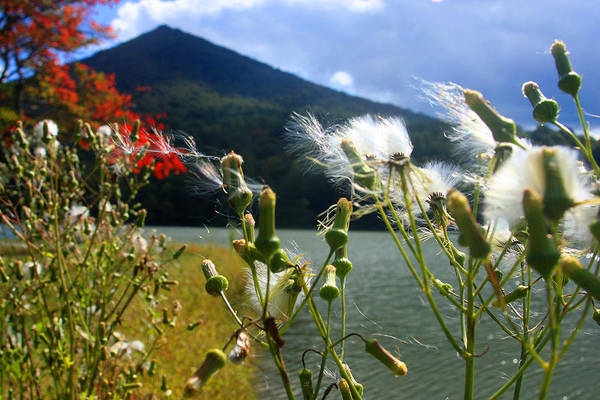 Photograph - Weeds At Peaks Of Otter by Emanuel Tanjala
