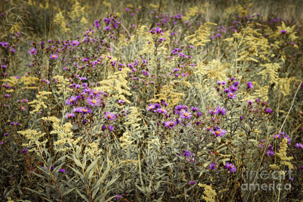Wall Art - Photograph - Weeds In Late Summer by Elena Elisseeva