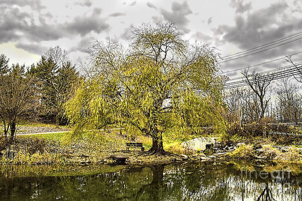 Photograph - Weeping Willow by Jim Lepard