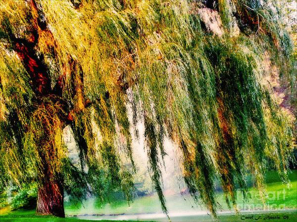 Weeping Willow Wall Art - Photograph - Weeping Willow Tree Meditation Wall Art Print  by Carol F Austin