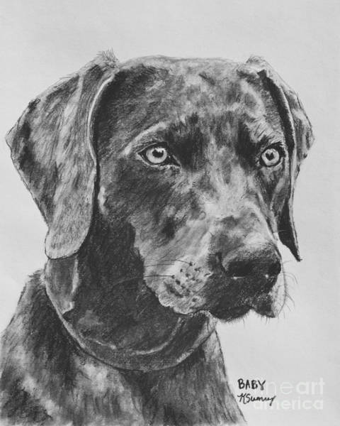 Art Print featuring the drawing Weimaraner Drawn In Charcoal by Kate Sumners