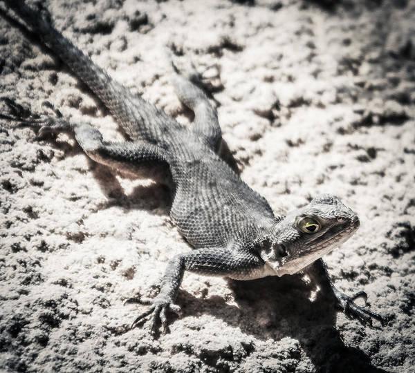 Photograph - Weird Lizard by Stwayne Keubrick