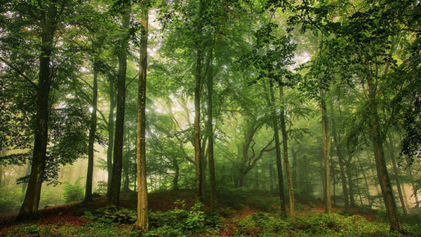 Wall Art - Photograph - Welcome In The Forest. by Leif L??ndal