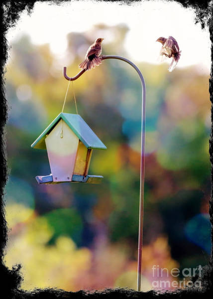 Wing Back Photograph - Welcome Neighbor - Digital Art by Carol Groenen