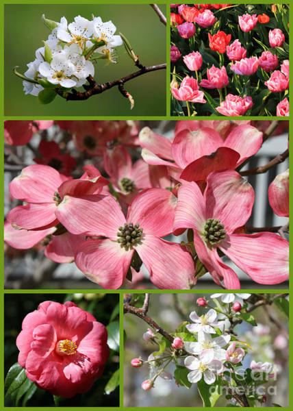 Photograph - Welcome Spring Collage by Carol Groenen