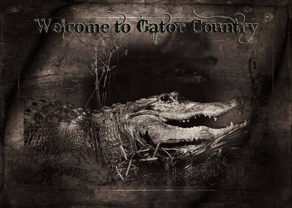 American Crocodile Photograph - Welcome To Gator Country by Mark Andrew Thomas