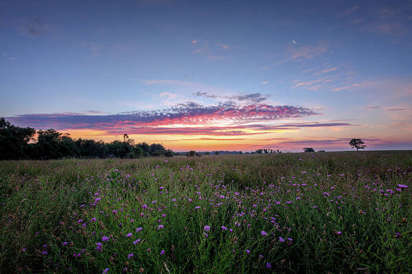Photograph - Welcome To My Morning by Bill Wakeley