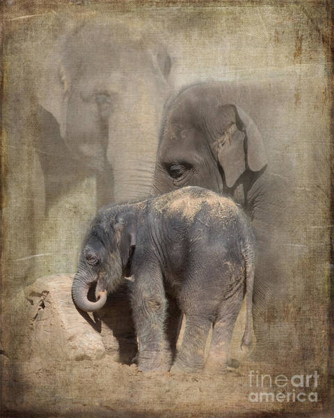 Houston Zoo Photograph - Welcome To Our World by TN Fairey