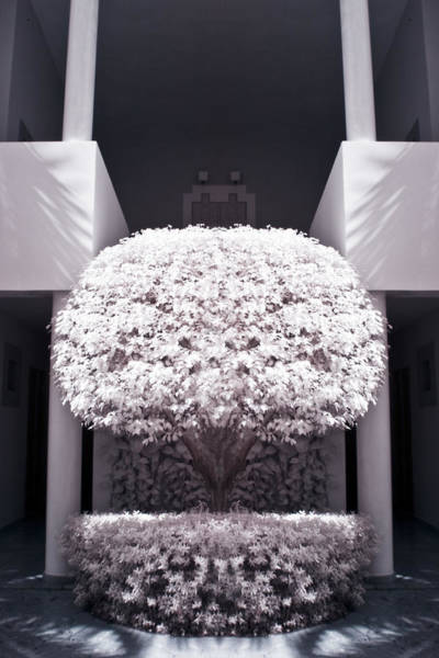 Photograph - Welcome Tree Infrared by Adam Romanowicz