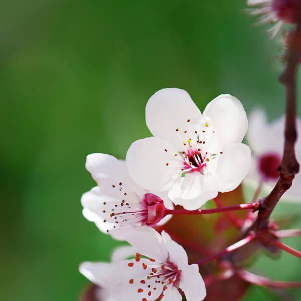 Greece Photograph - Welcoming Spring by Elias Kordelakos Photography