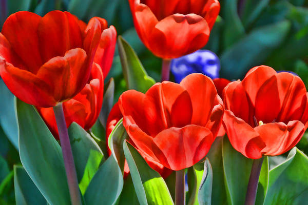 Photograph - Welcoming Spring  by Jeanne May