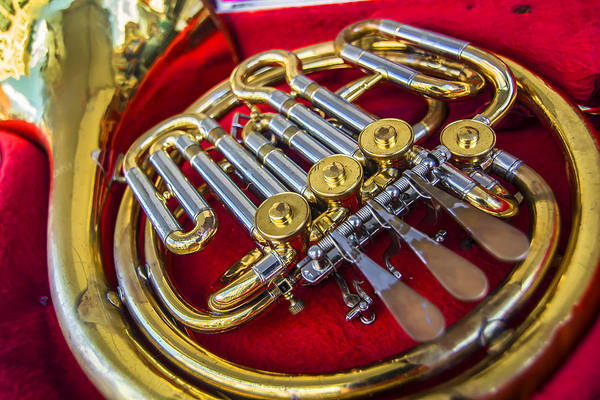 Photograph - Well Loved Horn by David Phoenix