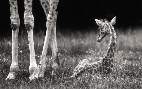 Baby Photograph - Well Protected by Andreas Feldtkeller