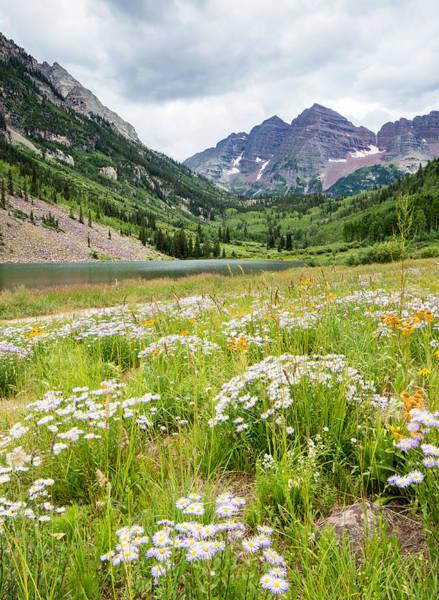 Fourteener Photograph - West Elk Wildflowers by Adam Pender