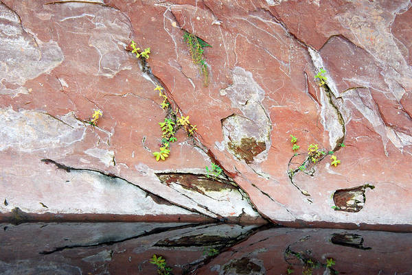 Photograph - West Fork Oak Creek Abstract by Tam Ryan