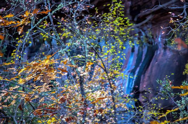 Oak Creek Canyon Painting - West Fork Wall by Brian Lambert