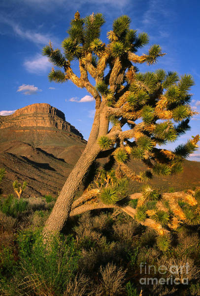 Photograph - West Grand Canyon by Inge Johnsson