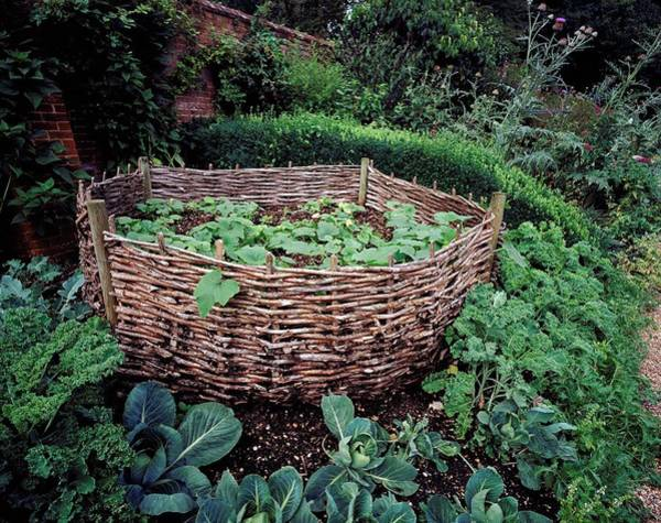 Vegetable Garden Photograph - West Green House by Paul Harcourt Davies/science Photo Library