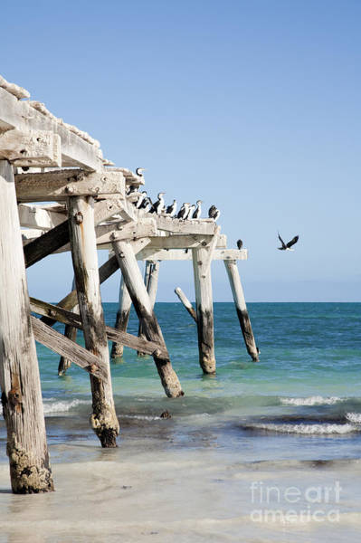 Wall Art - Photograph - Western Australia Eucla Old Jetty by Colin and Linda McKie