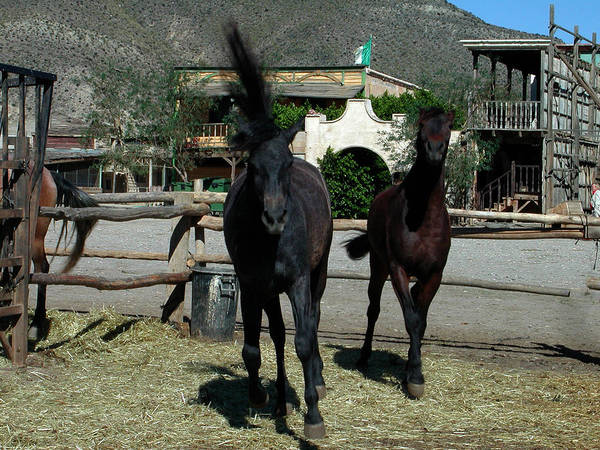 Photograph - Western Horses In Spain by Colette V Hera  Guggenheim