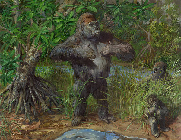 Western Lowland Gorilla Art Print by ACE Coinage painting by Michael Rothman