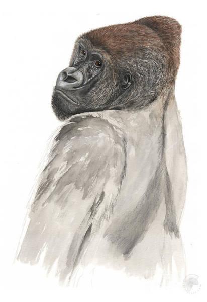 Painting - Western Lowland Gorilla - Gorilla Gorilla - Great Ape - Primate - Gorille - Gorila - Goriluapa by Urft Valley Art