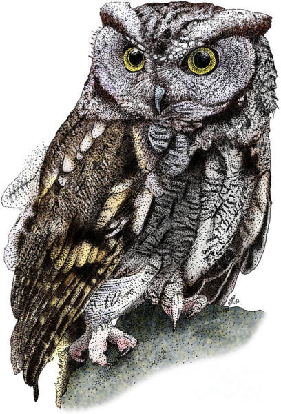Photograph - Western Screech Owl by Roger Hall