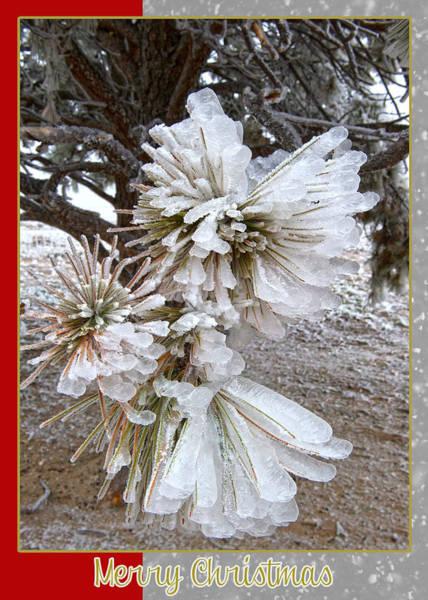 Mixed Media - Western Themed Christmas Card Pine Needles And Ice by Amanda Smith