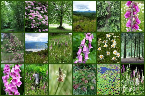 Photograph - Western Washington Nature Collage by Carol Groenen